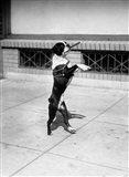 1930s Boston Terrier Performing