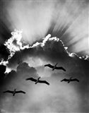 Birds In Sky Flying