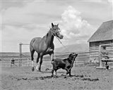 1950s 1960s Black Dog Leading Horse By Holding Rope
