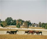 1990S Group Of Horses Beside White Pasture Fence