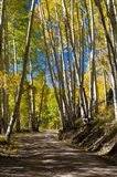 Road Passing through a Forest, Maroon Creek Valley, Aspen, Colorado