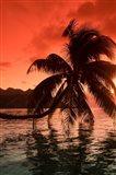 Palm Trees at Sunset, Moorea, Tahiti, French Polynesia