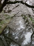 Cherry Trees Reflected in Moat of Hirosaki Park, Japan