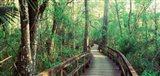 Fakahatchee Strand State Preserve, Florida
