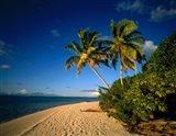 Palm trees and beach, Tahiti French Polynesia