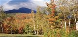 Trees on a field in front of a mountain, Mount Washington, White Mountain National Forest, Bartlett, New Hampshire, USA