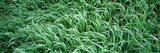 High angle view of grass, Montana, USA