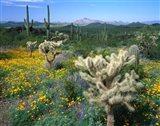 Arizona, Organ Pipe Cactus National Monument