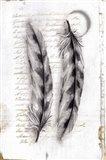 Vintage Feathers I