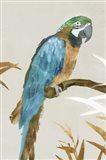 Blue Parrot I