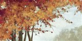 Fall Canopy I