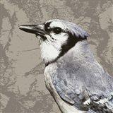 Feathered III