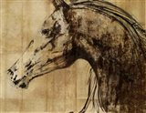 Stallion I - Print on Demand