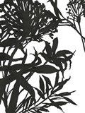 Monochrome Foliage I