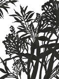 Monochrome Foliage II