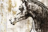 Equestrian Gold IV