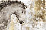 Equestrian Gold V