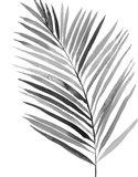 BW Palm IV