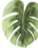 Palm Green I