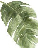 Palm Green II