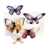 Butterfly Fly Away III