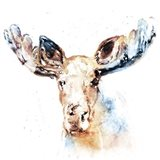 Watercolour Moose