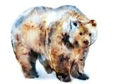 Bear Blue