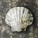 Marble Shell Series IV