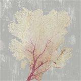 Blush Coral II