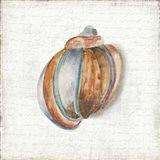 Seashell Portrait II