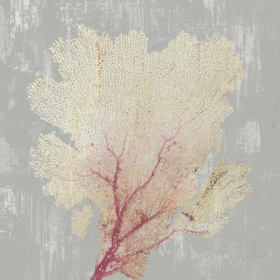 Blush Coral II Poster by Aimee Wilson for $56.25 CAD