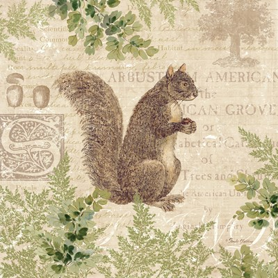 Woodland Trail III (Squirrel) Poster by Pamela Gladding for $32.50 CAD