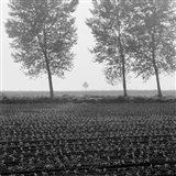 Trees of Tuscany