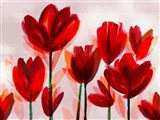 Contemporary Poppies Red