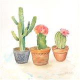 Cactus Pots III