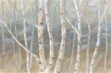 Silver Birch Landscape