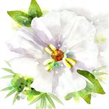 Floral Beauty III