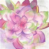 Sweet Succulents III