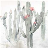Cactus Garden Gray Blush II