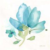 Blue Poppy Field Single II