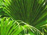 Painted Ferns II