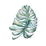 Island Leaf I