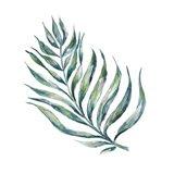 Island Leaf II