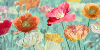 Poppies in Bloom Poster by Cynthia Ann for $50.00 CAD