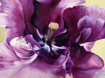 Purple Tulip Close-up Poster by Luca Villa for $63.75 CAD