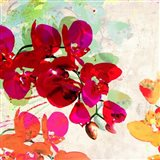 Orchidreams (detail)