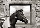 Painted Horse (BW)