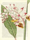 Vintage Botany II