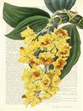 Vintage Botany III