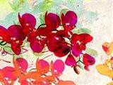 Orchidreams